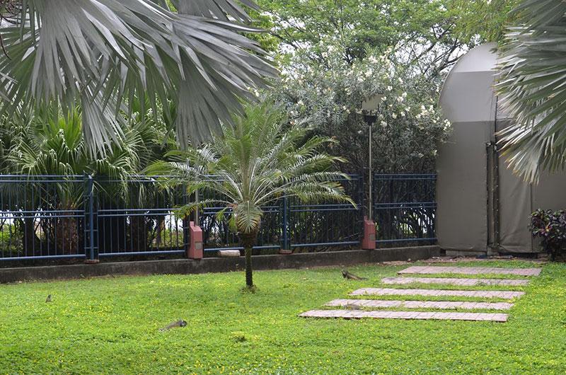 Iguanas no caminho de retorno do Cerro de Sant'ana