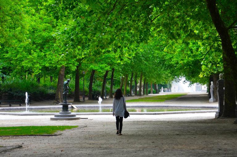 Folhas verdes de Bruxelas